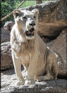 1958_CheyenneMtn_Zoo_A-Processed_DIGI