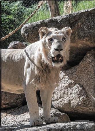 1959_CheyenneMtn_Zoo_A-Processed_DIGI