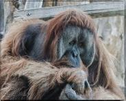 1961_CheyenneMtn_Zoo_A-Processed_DIGI