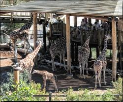 1972_CheyenneMtn_Zoo_A-Processed_DIGI