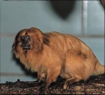 1985_CheyenneMtn_Zoo_A-Processed_DIGI