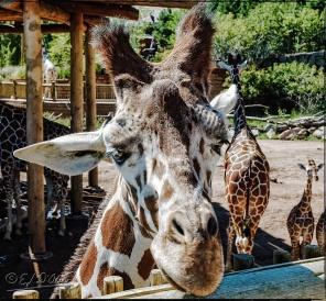 2009_CheyenneMtn_Zoo_A-Processed_DIGI