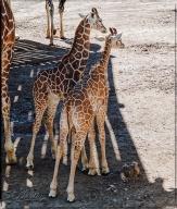 2013_CheyenneMtn_Zoo_A-Processed_DIGI