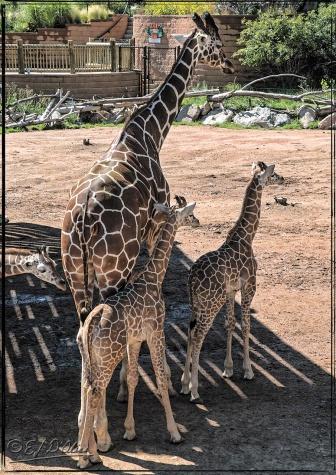 2016_CheyenneMtn_Zoo_A-Processed_DIGI