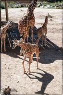 2017_CheyenneMtn_Zoo_A-Processed_DIGI