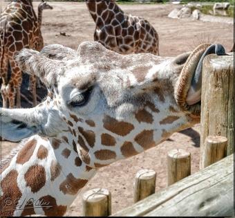 2020_CheyenneMtn_Zoo_A-Processed_DIGI