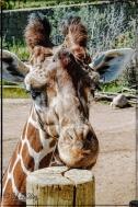2021_CheyenneMtn_Zoo_A-Processed_DIGI