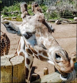 2023_CheyenneMtn_Zoo_A-Processed_DIGI