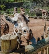 2024_CheyenneMtn_Zoo_A-Processed_DIGI