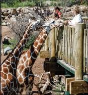 2025_CheyenneMtn_Zoo_A-Processed_DIGI