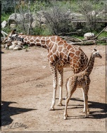 2026_CheyenneMtn_Zoo_A-Processed_DIGI