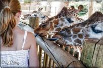 2030_CheyenneMtn_Zoo_A-Processed_DIGI