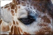 2032_CheyenneMtn_Zoo_A-Processed_DIGI