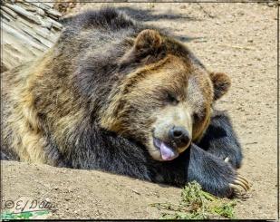 Cheyenne Zoo,