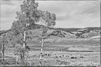 DSC_0073Buffolo-Meadow-PP-PP_Digi