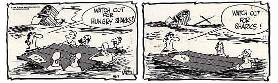 mb-sharks_p313-017