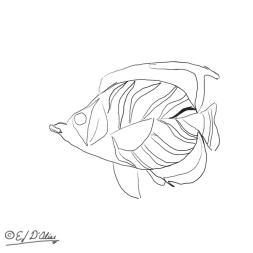 Don't laugh . . . it's a bit difficult drawing smooth lines on a small device.