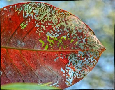 """""""New Color"""" - D7000 Photo"""