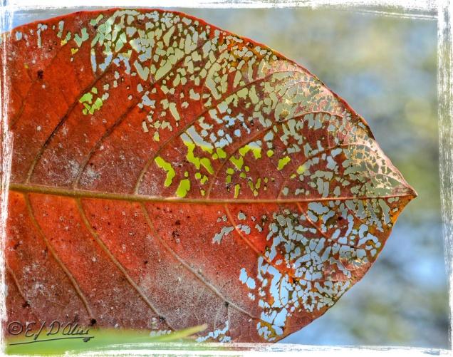 """Old Color"" - D7000 Photo"
