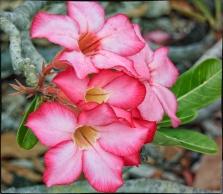 """New Color"" - P900 Photo"