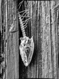 The Dead Gecko