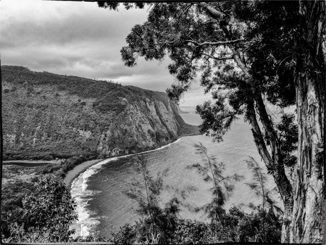 Landscape - 4