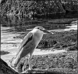 Processed using DxO Nik Collection Silver Efex Pro