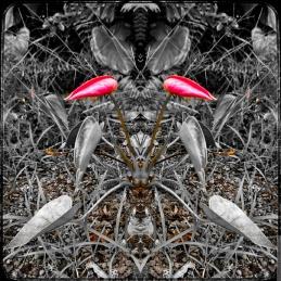primary3APictures2FPhotoshop20Express2FPSX_20190225_175654_mirror4
