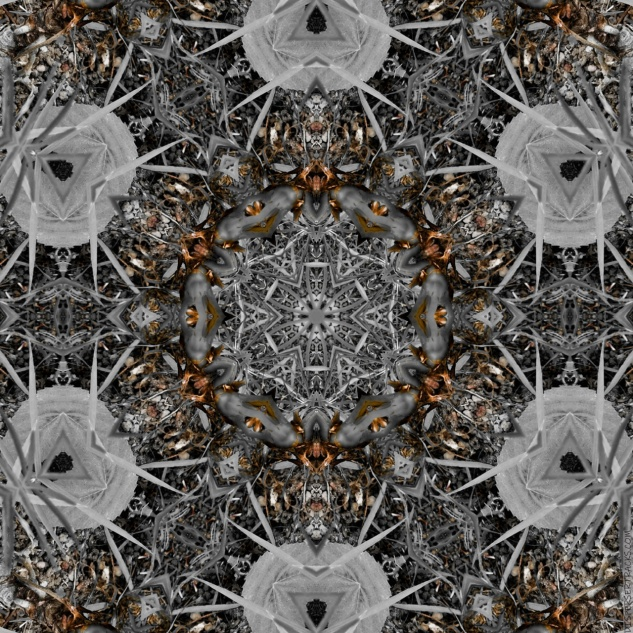 primary3APictures2FPhotoshop20Express2FPSX_20190225_175654_mirror8