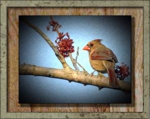 Another look at the cardinal.
