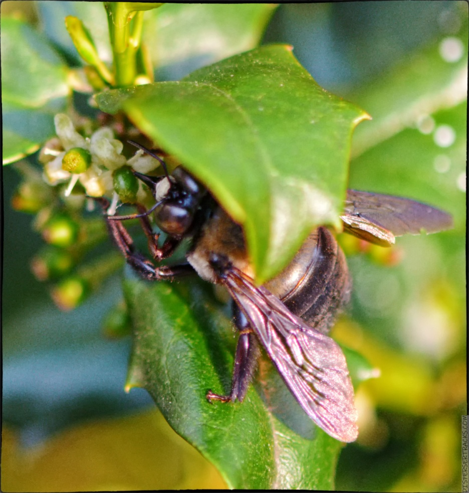 Bee playing Hide-n-Seek