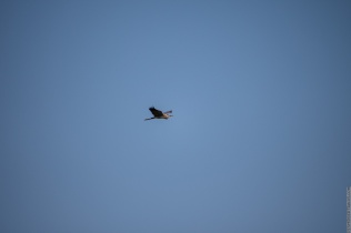 As it came out of the camera (300mm zoom)