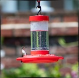 "Bird 1: ""I don't have time to look for bugs. I'm on the lookout for other hummingbirds . . ."""
