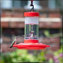 "Bird 3: ""Don't worry; if any show up, I go behind the feeder and then I appear very large and they leave me alone."""