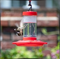 "Bird 1: ""Oh, for FSM's sake! I'm outta here."""
