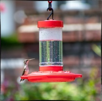 "Bird 3: ""Let me look for other hummingbirds before I take a few sips of this here pseudo-nectar . . ."""