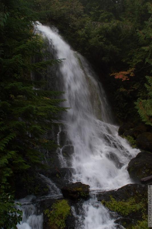 0024-Mt_Rainier_Drive