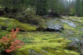 DSC_0042-Mt_Rainier_Drive
