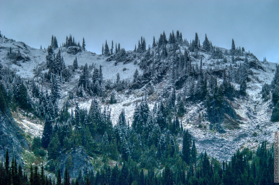 DSC_0088-Mt_Rainier_Drive