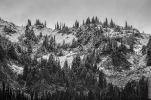 DSC_0088-Mt_Rainier_Drive BnGnW