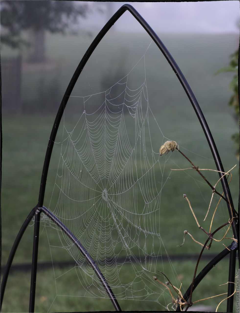 Cobweb in the fog