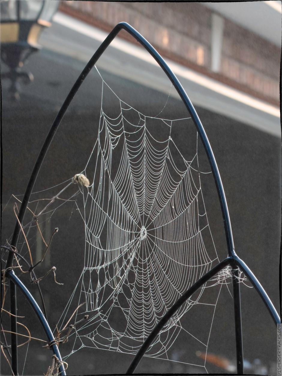 Cobweb in the fog