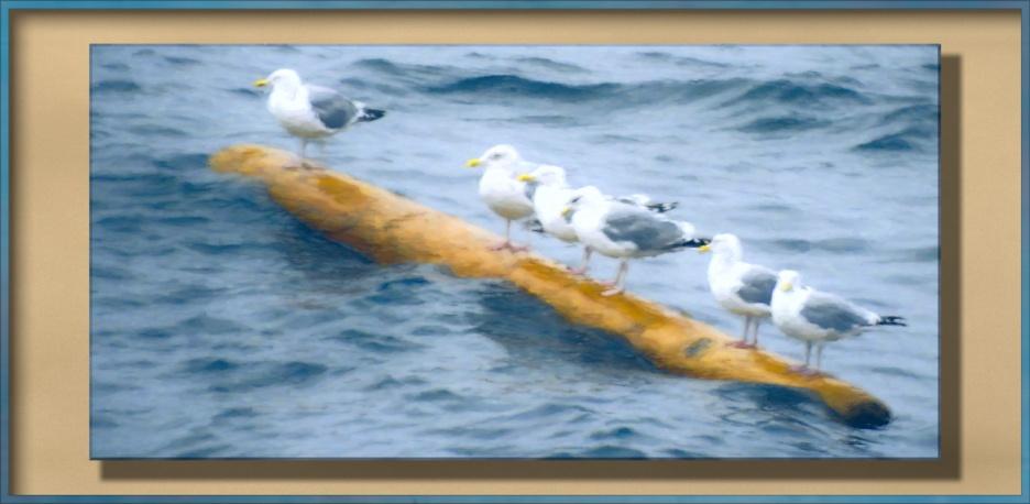 Six seagulls perched on a floating log.