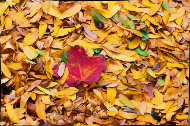 Fall Leaves with impression plugin