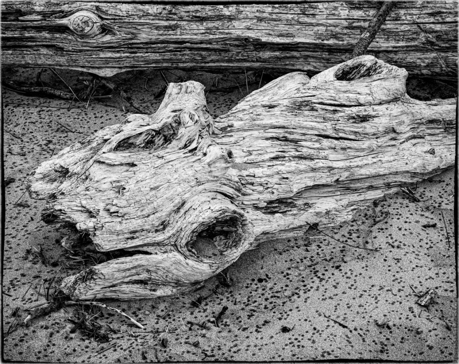 driftwood on beach in monochrome