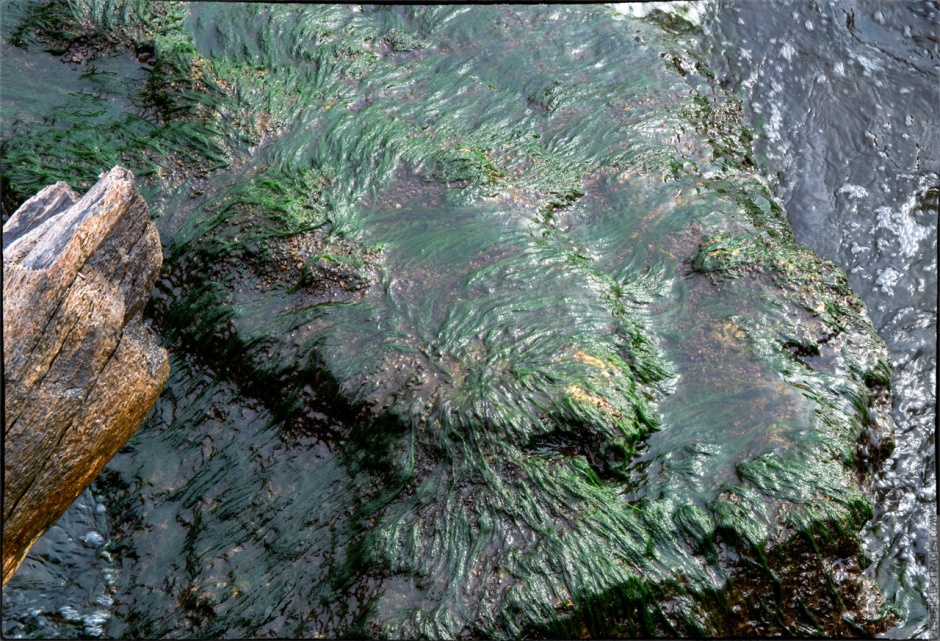 Algae and water on a rock