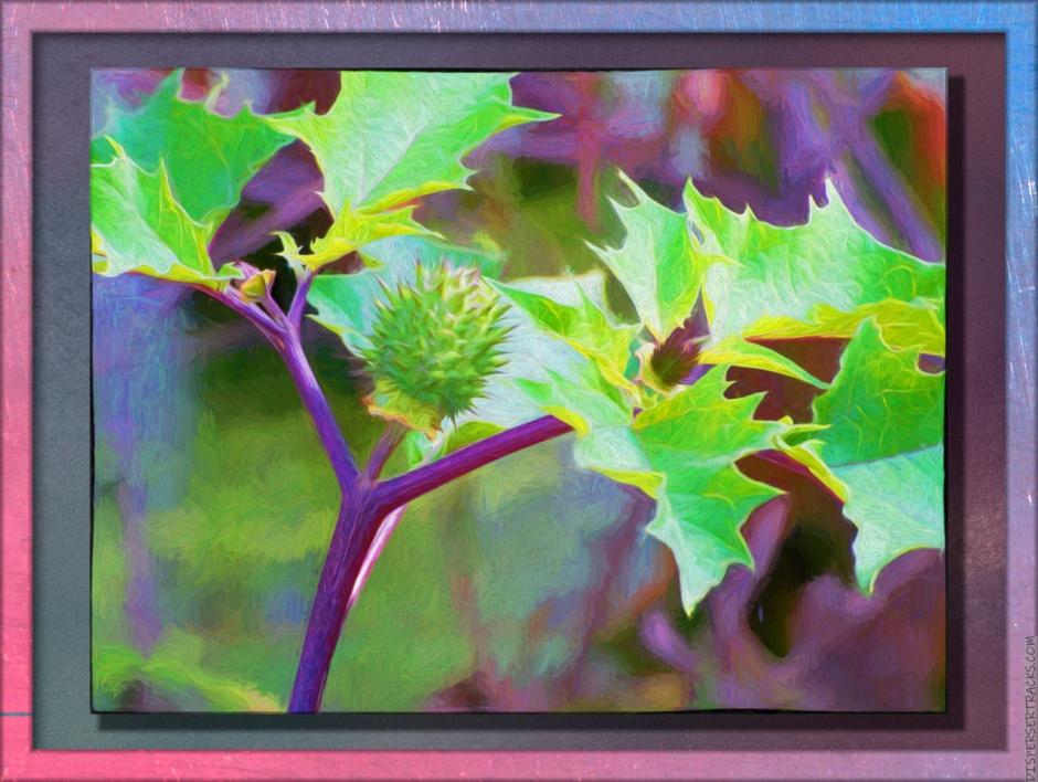 Stylized Jimson Weed fruit photo