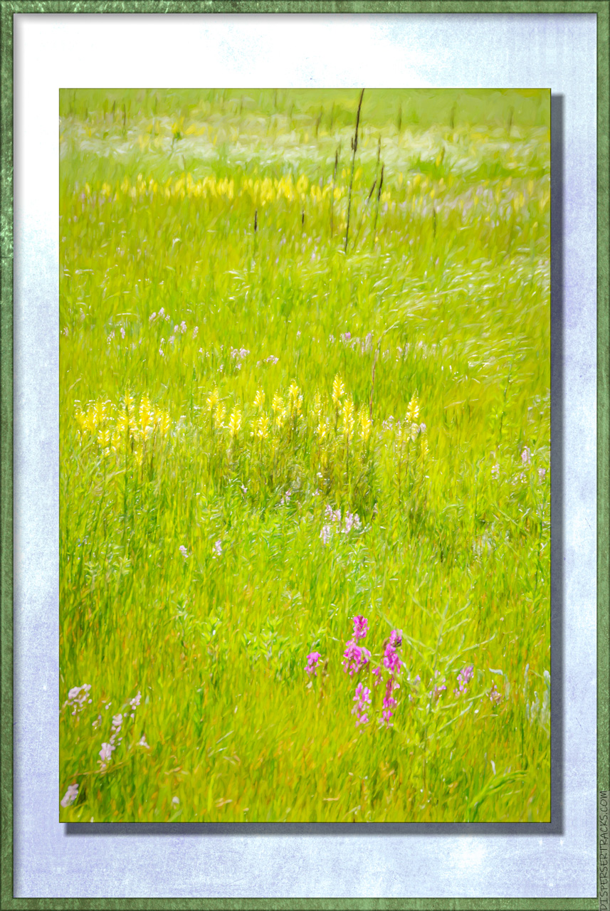 a meadow with wildflowers . . . artizied.