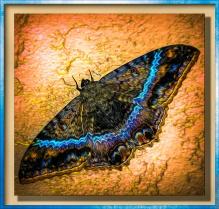 a big moth
