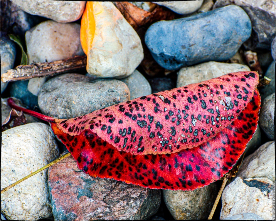 Colorful leaves on rocks
